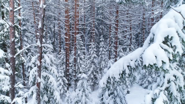 winter landscape. aerial view - pine stock videos & royalty-free footage