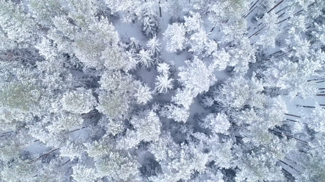 winter landscape. aerial view - snowflake stock videos & royalty-free footage