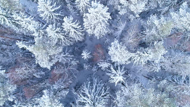winter landscape. aerial view - snow stock videos & royalty-free footage