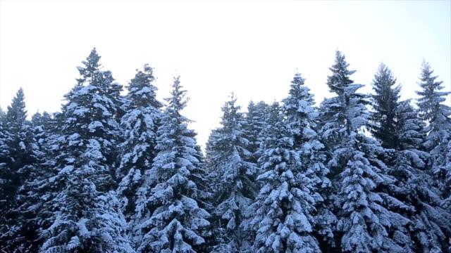 Vinterlandskap i skogen