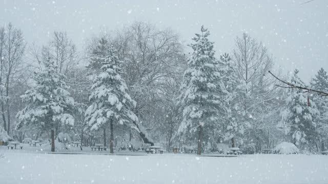 vinterlandskap - loopable - polarklimat bildbanksvideor och videomaterial från bakom kulisserna