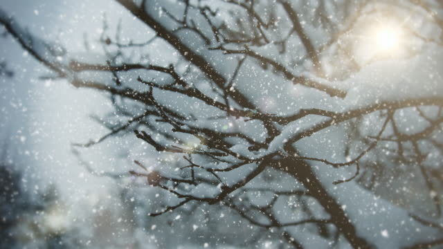 winter landscape | | loopable - snowing stock videos & royalty-free footage