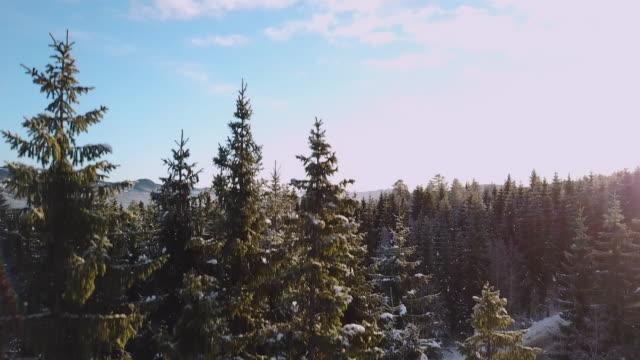 winterlandschaft skifahren - skiurlaub stock-videos und b-roll-filmmaterial