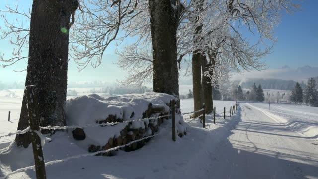 winter landscape, trauchgau near fuessen, allgaeu alps, swabia, bavaria, germany - tree trunk stock videos & royalty-free footage