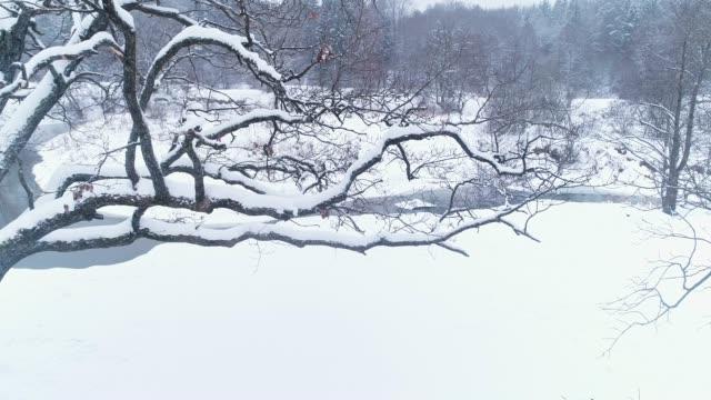 winter landscape - frozen stock videos & royalty-free footage