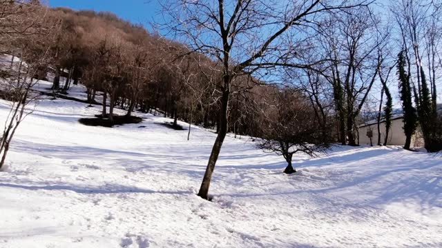 vídeos de stock e filmes b-roll de winter landscape - pinaceae