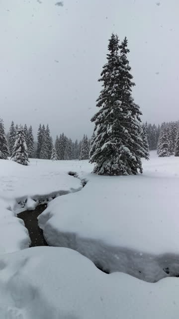 winter landscapes. close up of flowing water from a mountain river melting the deep white snow. backgrounds. - pine woodland stock videos & royalty-free footage