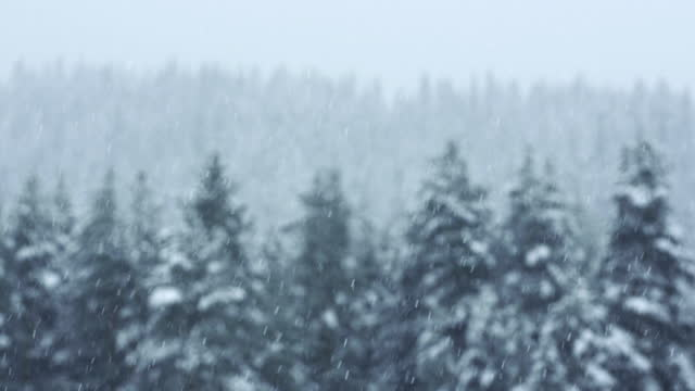 winter landscapes. close up shot of mountain pines covered with deep white snow. snowing hard. - branch stock videos & royalty-free footage