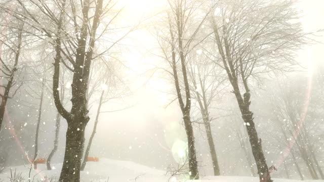 winterlandschaft, schneefall, sonnenlicht - schneeverwehung stock-videos und b-roll-filmmaterial