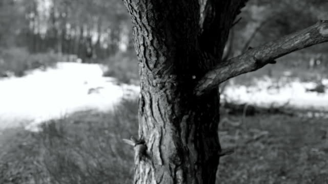 winter landscepe and tree, selective focus - high contrast stock videos & royalty-free footage