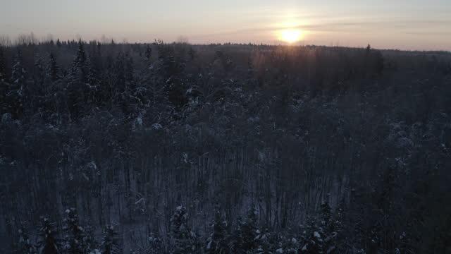 vídeos y material grabado en eventos de stock de landscpae de invierno - vista aérea, bielorrusia - protección de fauna salvaje