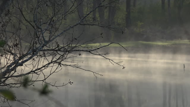 winter morning rising water vapors and sunlight - condensation stock videos & royalty-free footage
