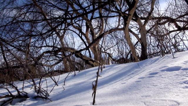 vidéos et rushes de hiver nature backgroud - neige fraîche
