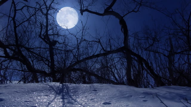 winter night - full moon stock videos & royalty-free footage