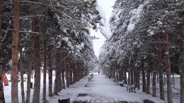 雪の下の冬の公園。市立公園の吹雪。 - カバノキ点の映像素材/bロール