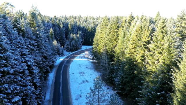 vídeos de stock, filmes e b-roll de estrada do inverno - pinaceae
