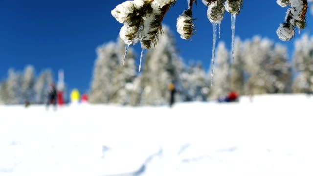 winter scene. focus on snowy pine branches while people skiing at the background - winter holiday stock videos and b-roll footage