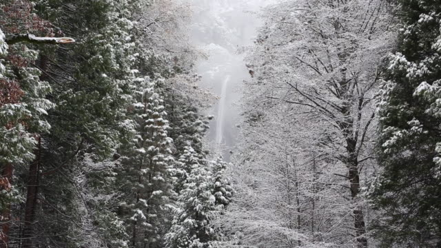 a winter scene in yellowstone national park with snow on the trees. - parco nazionale di yosemite video stock e b–roll