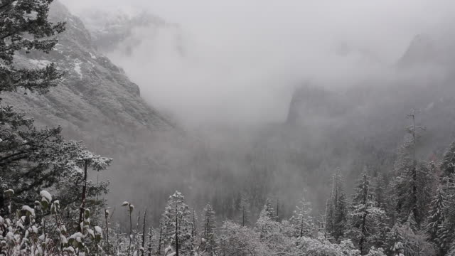 a winter scene in yellowstone national park with snow on the trees. - californian sierra nevada stock videos & royalty-free footage