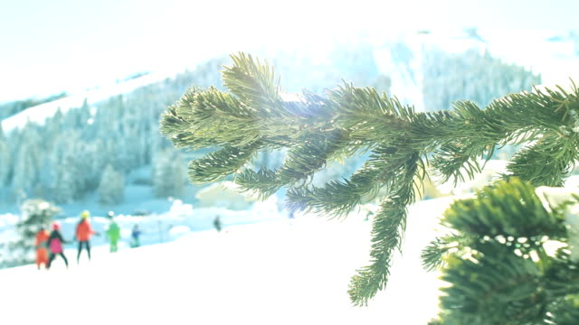 winter scene. sun rays hitting the lens through snowy pine branches while people skiing at the background - skiwear stock videos & royalty-free footage