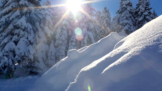 winter scene. sun rays hitting the lens through snowy pine tree branches - freshness stock videos & royalty-free footage