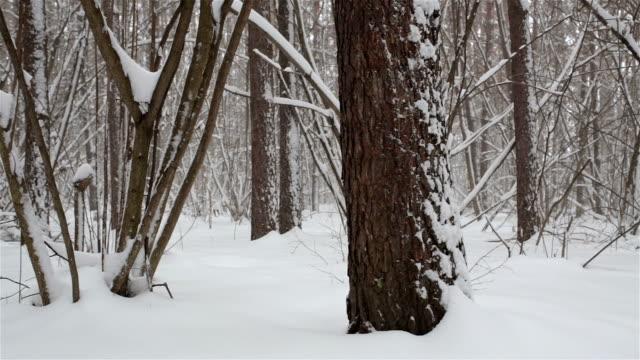 vidéos et rushes de paysage d'hiver avec tempête de neige dans la forêt. - neige fraîche