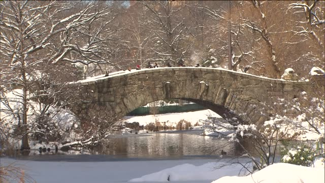 winter scenes from central park at central park on in new york city - aquatisches lebewesen stock-videos und b-roll-filmmaterial