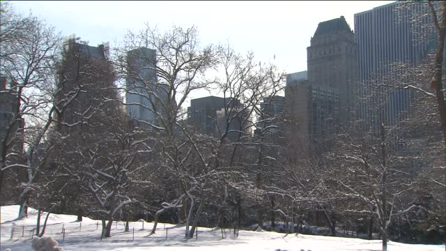 winter scenes from central park at central park on in new york city - akvatisk organism bildbanksvideor och videomaterial från bakom kulisserna