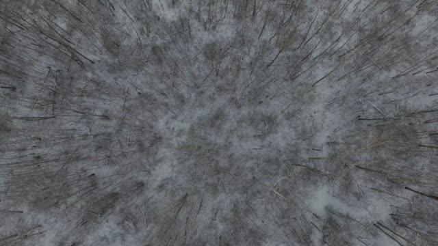 winter scenes - lakeshore stock videos & royalty-free footage