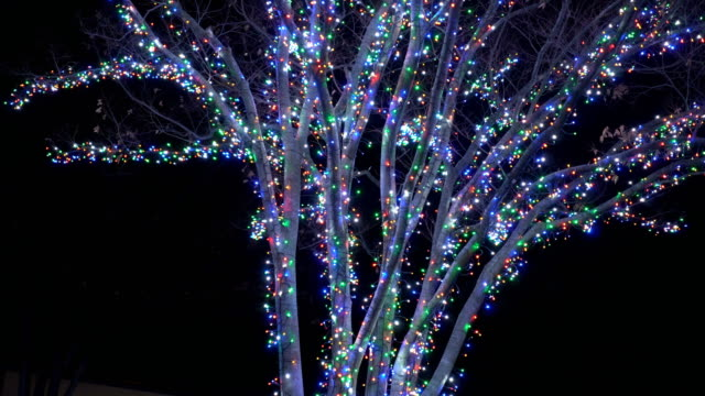 winter season with light illumination on tree at night in winter nagoya, japan. - christmas lights stock videos & royalty-free footage