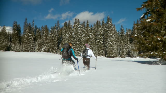hd: winter showshoeing adventure - spruce stock videos & royalty-free footage