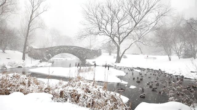 vidéos et rushes de central park l'hiver pond - central park manhattan