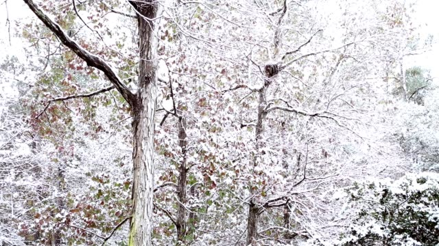 Winter snow falling in the forest.