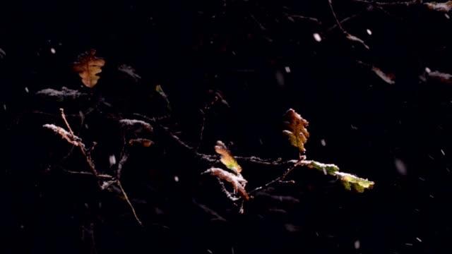 Winter snow falling on Fall leaves of Burr Oak Tree