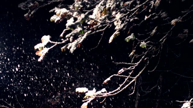 winter snow falling on fall leaves of burr oak tree - midnight stock videos and b-roll footage