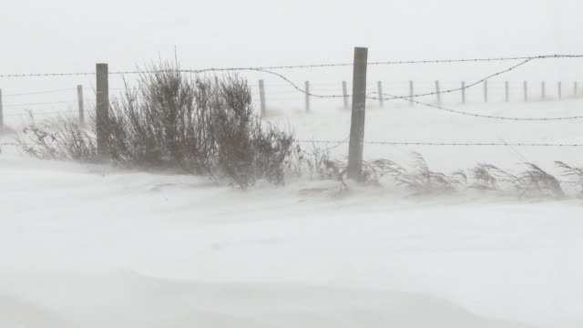 Winter snow storm in the prairies