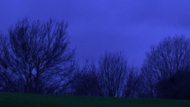 London at sunrise ENGLAND London Bare tree branches against dark morning sky / jogger along / birds flying / dog in park / few people in park / kite...