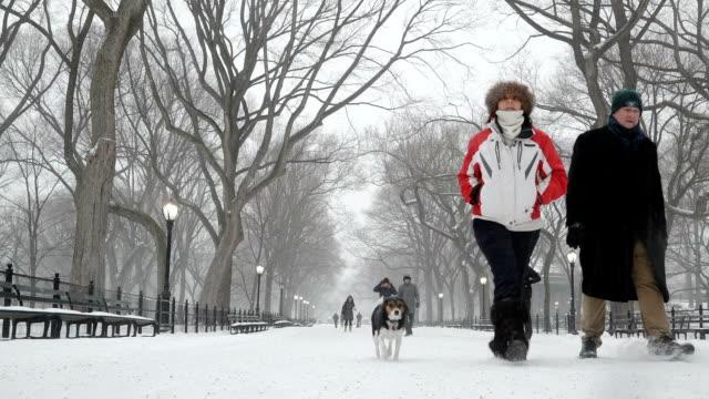 winter storm stella hits the northeast of the united states / central park, manhattan, new york city, usa. - 水の形態点の映像素材/bロール