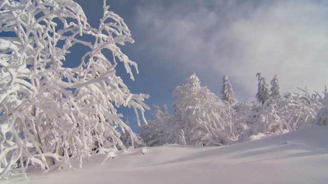 winter, sunny day, frozen and snow covered forest - inquadratura dal basso video stock e b–roll