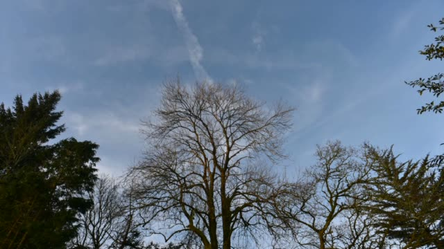 winter timelapse. - bare tree stock videos & royalty-free footage