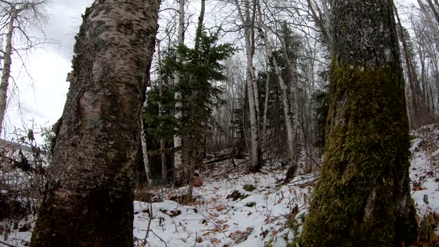 winter trail in boreal forest with sound - audio available stock videos & royalty-free footage