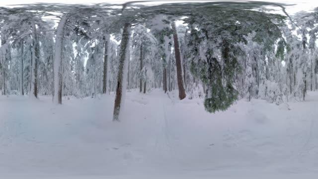 Winter Trail Scene, Oregon