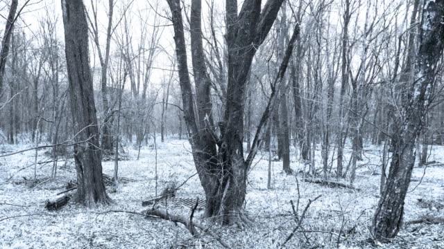 Winter Trees 2