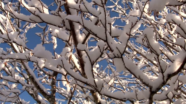 winter trees - solstice stock videos & royalty-free footage