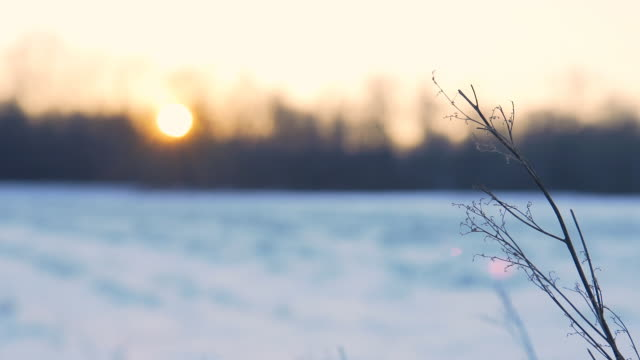 hd dolly: winter twig at dusk - twig stock videos & royalty-free footage