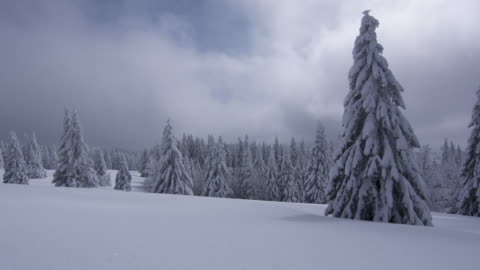winter - 40 seconds or greater stock videos & royalty-free footage