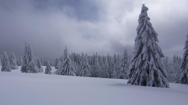stockvideo's en b-roll-footage met winter - meer dan 40 seconden