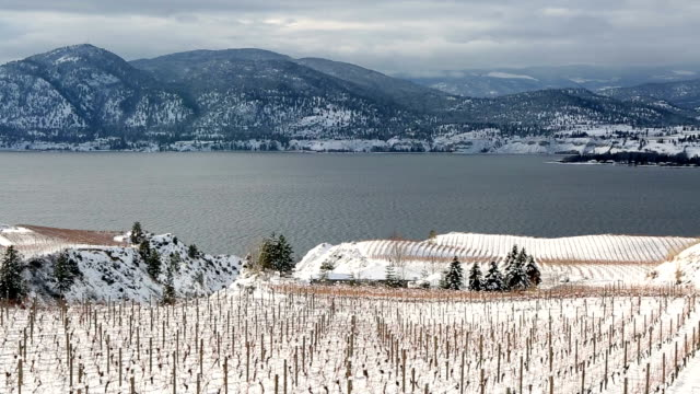 winter vineyard okanagan valley - british columbia stock videos & royalty-free footage