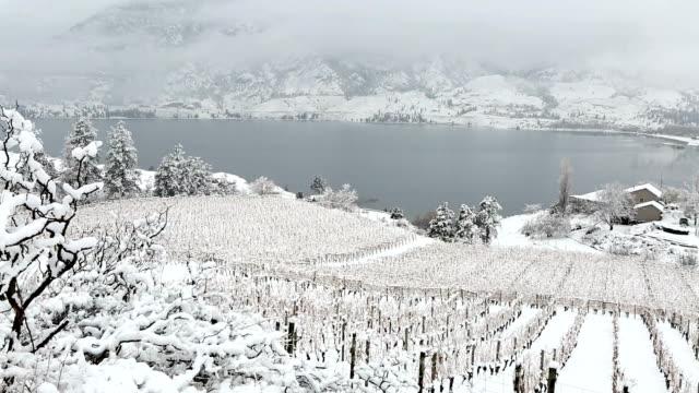 winter vineyard okanagan valley - uva video stock e b–roll