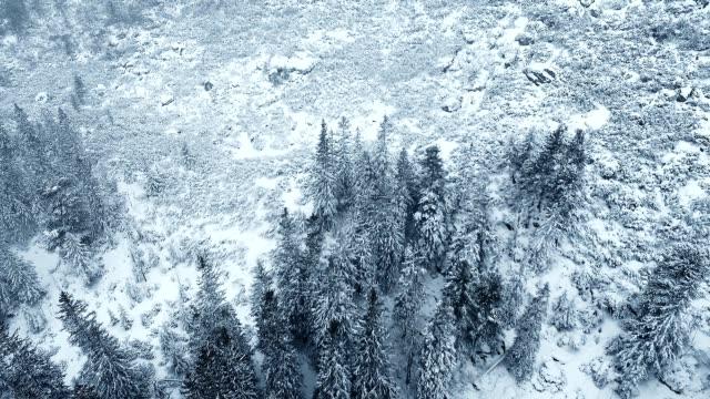 vídeos de stock e filmes b-roll de winter wonderland. snowy mountain landscape with forest and stream - coberto de neve